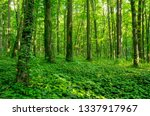 sunlight in the green forest ... | Shutterstock . vector #1337917967