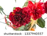 carnations isolated on white...   Shutterstock . vector #1337940557