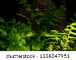 Stock photo bigfoot peeking through foliage on a black background with colored gels 1338047951