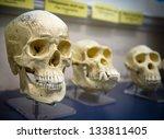 three skulls in a raw showing...   Shutterstock . vector #133811405