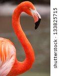 A Flamingo Observes Its...