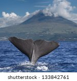 Big fin of a Sperm whale in front of volcano Pico, Azores islands - stock photo