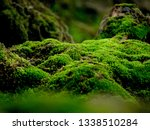 Beautiful Green Moss On The...