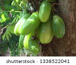 thai fruits that are very sour | Shutterstock . vector #1338522041