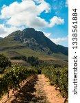 Wine Region Stellenbosch  South ...