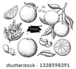 Orange Fruit Vector Drawing....
