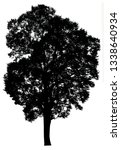 silhouette tree isolated on a... | Shutterstock . vector #1338640934