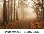 Misty Forest In Autumn With...