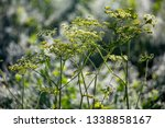 closeup of rural weed on nature ... | Shutterstock . vector #1338858167