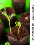 Closeup Of Two Green Growing...