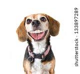 A Cute Beagle With A Big Grin...