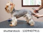 animal grooming at veterinary... | Shutterstock . vector #1339407911