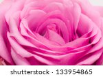 pink rose close up | Shutterstock . vector #133954865