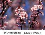 fruits blossom  april   Shutterstock . vector #1339749014