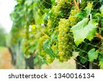 bird protection net on wine... | Shutterstock . vector #1340016134