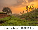 Tea Plantations In Munnar ...
