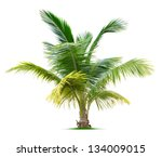 young palm tree isolated on... | Shutterstock . vector #134009015