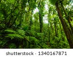 lush vegetation in basse terre... | Shutterstock . vector #1340167871