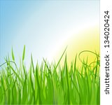 grass vector illustration | Shutterstock .eps vector #134020424