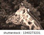 the giraffe  giraffa... | Shutterstock . vector #1340273231