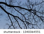 trees against the sky | Shutterstock . vector #1340364551