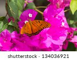Small photo of Gulf Fritillary, Agraulis vanillae incarnata