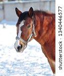 Red Horse Snow - Fine Art prints