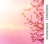 beautiful apple tree blossom on ... | Shutterstock . vector #134052641
