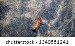 night moth cutworm imago during ...   Shutterstock . vector #1340551241