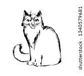 hand drawn cat sketch...   Shutterstock .eps vector #1340579681