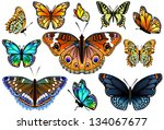 Stock vector set of colorful isolated butterflies vector illustration 134067677