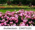 Stock photo shrub roses 134071121