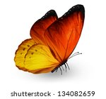 Orange Butterfly   Isolated On...