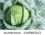 top view of long lived cabbage... | Shutterstock . vector #1340882621
