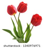 Three Red Tulips Isolated On A...