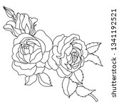 hand drawn black and white rose ... | Shutterstock .eps vector #1341192521