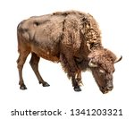 Bison Isolated On A White...