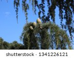 close up of three pinecones... | Shutterstock . vector #1341226121