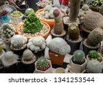 group of cactus in agriculture... | Shutterstock . vector #1341253544