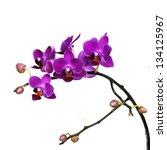 Dark Pink Orchid Flowers...