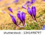wonderful spring view of alpine ...   Shutterstock . vector #1341498797