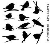 vector silhouettes of bird...   Shutterstock .eps vector #1341683951