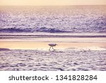 Heron In The Surf Line On The...
