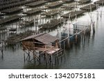 oyster farms in the sea at the... | Shutterstock . vector #1342075181