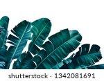 Tropical Banana Leaf  Dark Blu...
