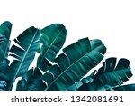Tropical Banana Leaf  Dark Blue ...