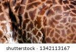 skin of giraffe  giraffa... | Shutterstock . vector #1342113167