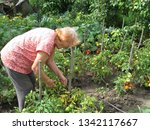old woman working in a summer... | Shutterstock . vector #1342117667
