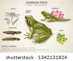 frog life style retro biology... | Shutterstock .eps vector #1342131824