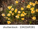 colorful yellow and purple...   Shutterstock . vector #1342269281